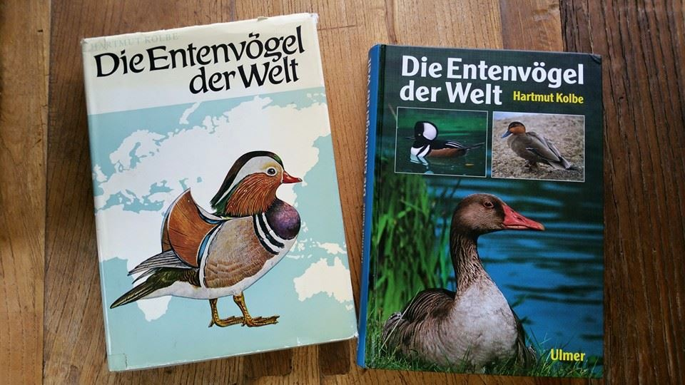 entenvogel_kolbe.jpg
