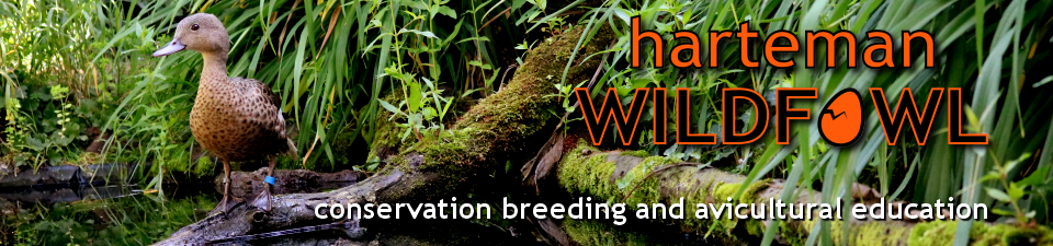 Harteman Wildfowl - What is the maximum lifespan of wildfowl?