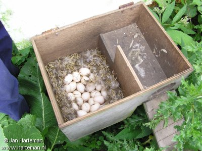 Teal nest box