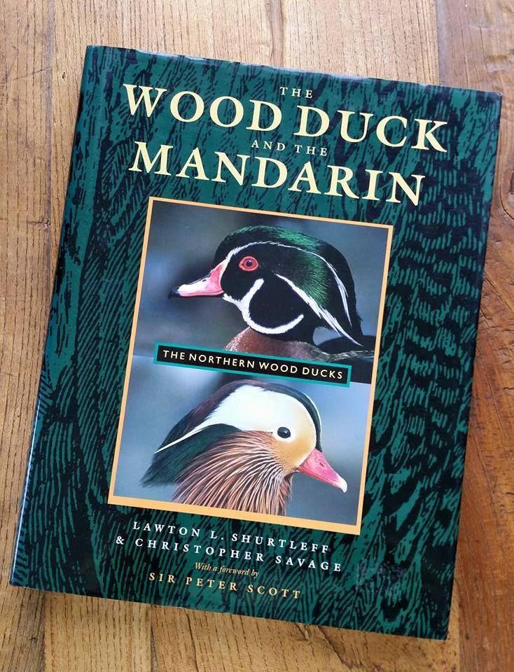 wood_duck_mandarin.jpg
